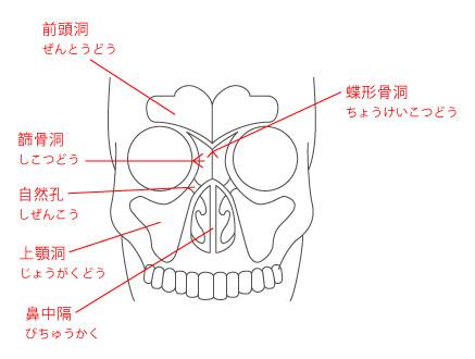 歯科と耳鼻科の連携医療について